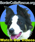 Link to video page about the work of Border Collie Rescue