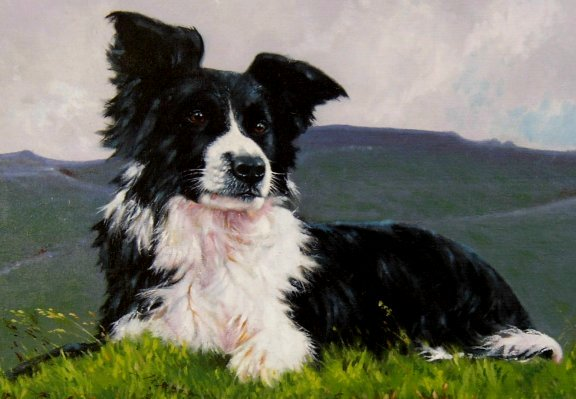 Border Collie Rescue - RESTING - Painted and presented by artist Jimmy Tulloch