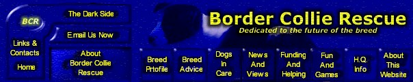 Border Collie Rescue - Main menu bar Border Collie image